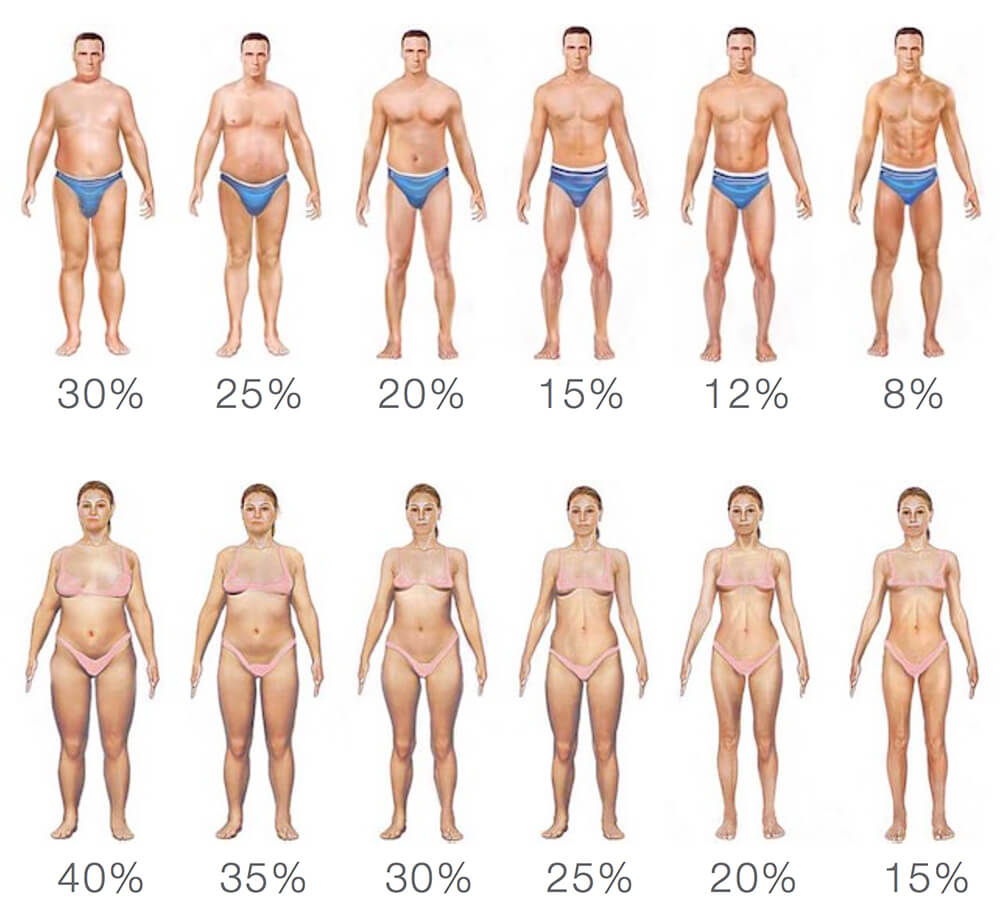 Nutrition Calculator - Male and Female Body Fat Percentage Diagram