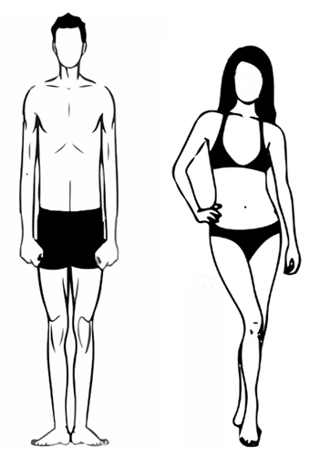Nutrition Calculator - Ectomorph Body Type