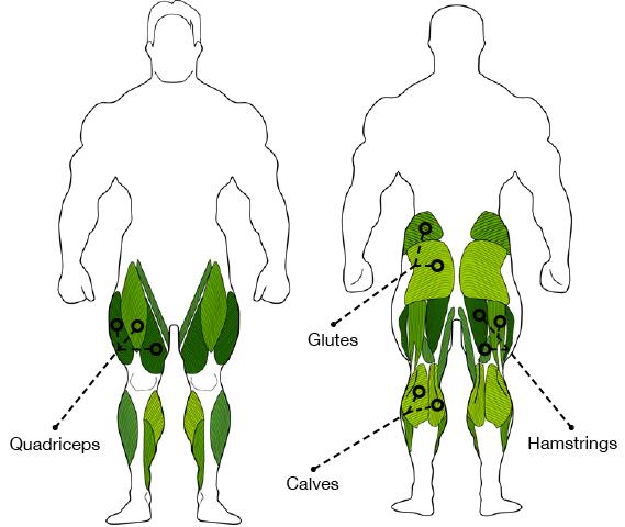 Squat Exercise Diagram Wiring Diagrams